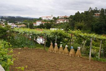 Vila de Cucujaes