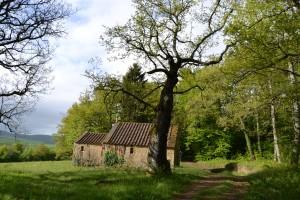 Une chapelle dans les bois