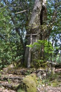 La croix semble ne faire qu'un avec l'arbre