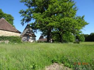 Vezelay 2014 (1901)
