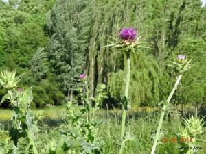 Vezelay 2014 (2063)